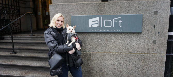A Dog Travels to Aloft Hotel in Liverpool