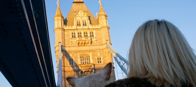 A Dog Travels to the Tower Bridge in London