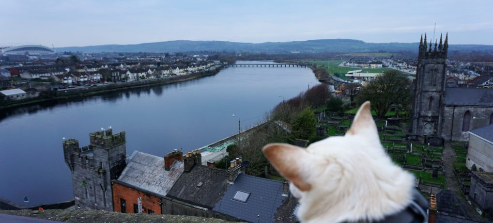 A Dog Travels to Limerick Ireland and is King of the Castle