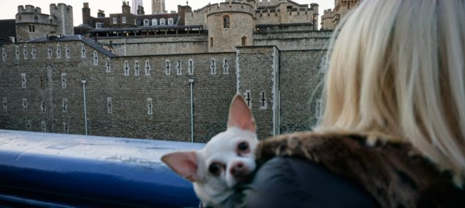 A Dog Travels to the Tower of London