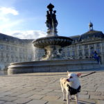 correctedDSC06973-683x1024 A Dog Travels to Bordeaux part 2