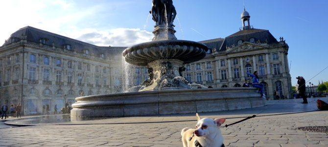 A Dog Travels to Bordeaux part 1