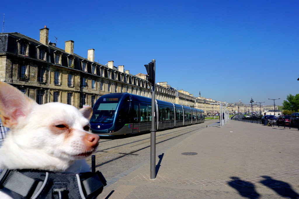 corrctedDSC07138-1024x683 A Dog Travels to Bordeaux part 1
