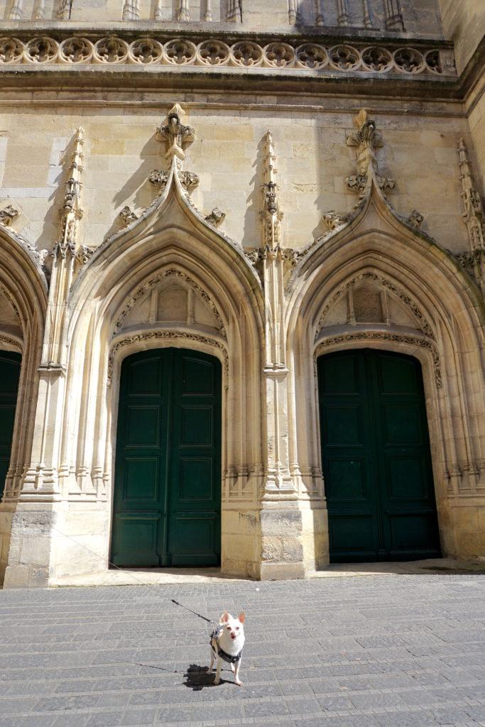 correctedDSC06973-683x1024 A Dog Travels to Bordeaux part 2