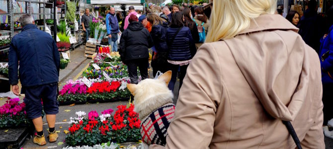 A Dog Travels to the Columbia Road Flower Market in London