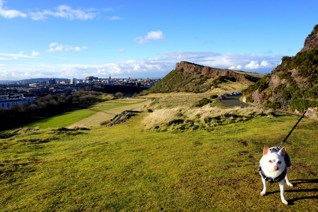 correctedDSC01598-1024x683 Holyrood Park (Queen's Park) and Arthur's Seat Adventures with a Small Dug