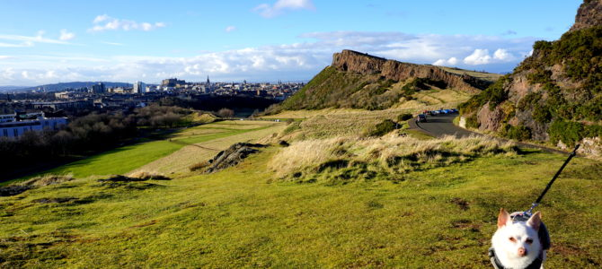 Holyrood Park (Queen's Park) and Arthur's Seat Adventures with a Small Dug