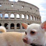 correctedDSC07641-683x1024 A Dog Travels to Florence, Italy Part 2