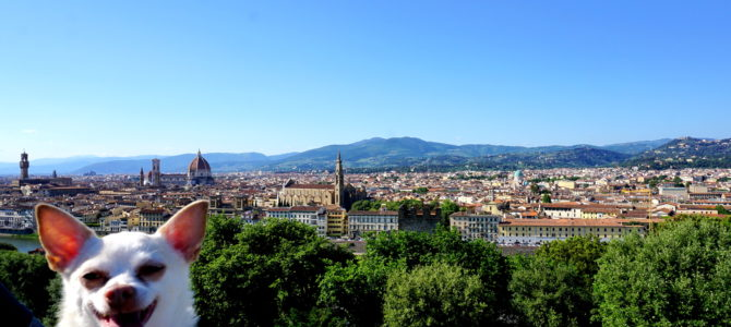A Dog Travels to Florence, Italy Part 2