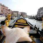 pet-passport How we traveled to Dubrovnik, Croatia From Florence, Italy with a Small Dog