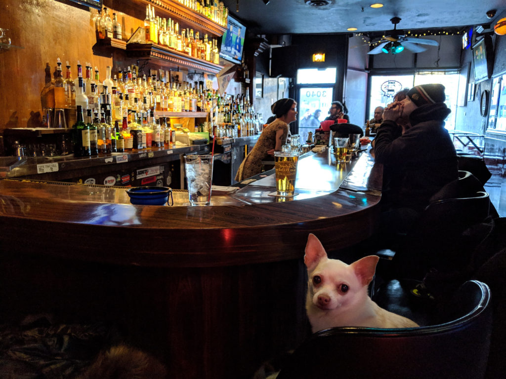 DSC04342-1024x683 Chicago Dog Friendly Bars