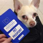 pet-passport-150x150 How to Prepare a Small Dog for Travel to the EU from the US with a Health Certificate